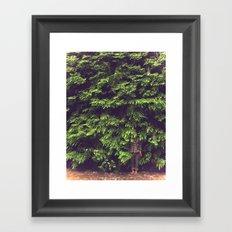 Prairie Redwoods Fern Gully Framed Art Print