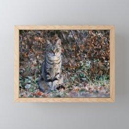 Sitting cat posing Framed Mini Art Print
