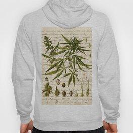 Marijuana Cannabis Botanical on Antique Journal Page Hoody