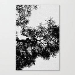 Pine Tree Black & White Canvas Print