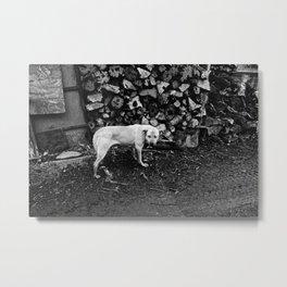 rail thin dog Metal Print