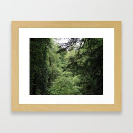 Transparent Forest (crop) Framed Art Print