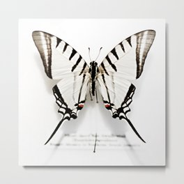 BUTTERFLY   FIG. 01 Metal Print