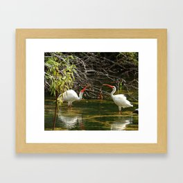 Ibis Dating Place Framed Art Print
