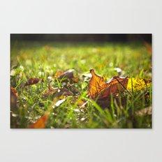 Each Day I Fall Canvas Print
