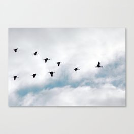 """Flock"" Bird Art by Murray Bolesta Canvas Print"