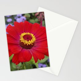 Red zinnia - blazing ring of fire Stationery Cards