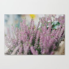 Lovely Pink. Canvas Print