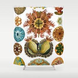 Ernst Haeckel Ascidiae Sea Squirts Shower Curtain