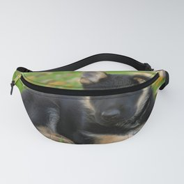 8 weeks old shepherd puppy Fanny Pack
