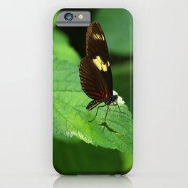 Doris Longwing iPhone Case