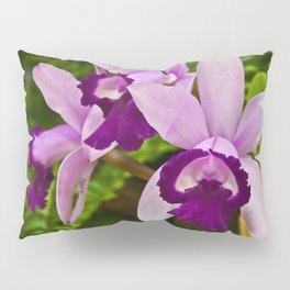 Cattleya Orchid Pillow Sham