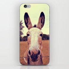 a curious donkey. iPhone & iPod Skin