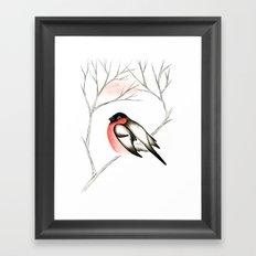 Eurasian Bullfinch (Снегирь) Framed Art Print