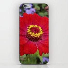 Red zinnia - blazing ring of fire iPhone Skin