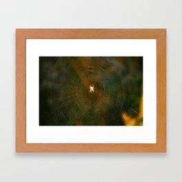 Rainbow Web Framed Art Print