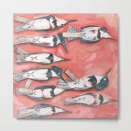Belted Kingfisher Specimens Metal Print