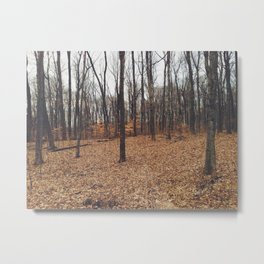 Indiana Forest Metal Print