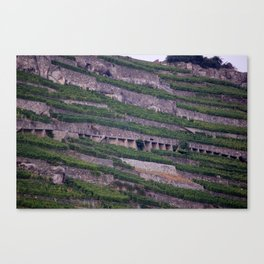 Vineyards 2 Canvas Print