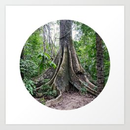 Massive Tree in Amazon Jungle Circle Fine Art Print Art Print