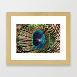 Eye of the Peacock Feather Framed Art Print