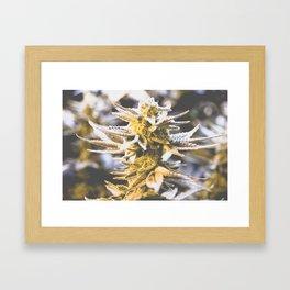 Beautiful Flower Framed Art Print