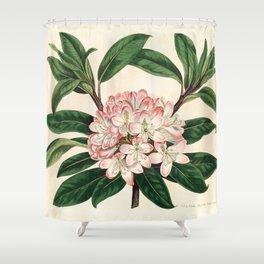 Rhododendron maximum 'Great laurel' Shower Curtain