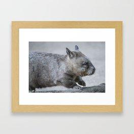 Australian Wombat Framed Art Print