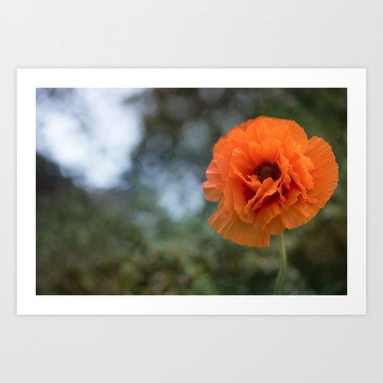 Enlightened Poppy - Poppies Flowers Flower on #Society6 Art Print