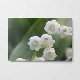 Bloomed White Flower Close-Up Metal Print