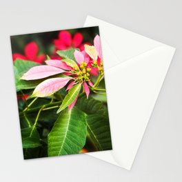 Pink Poinsettia Mexico Stationery Cards