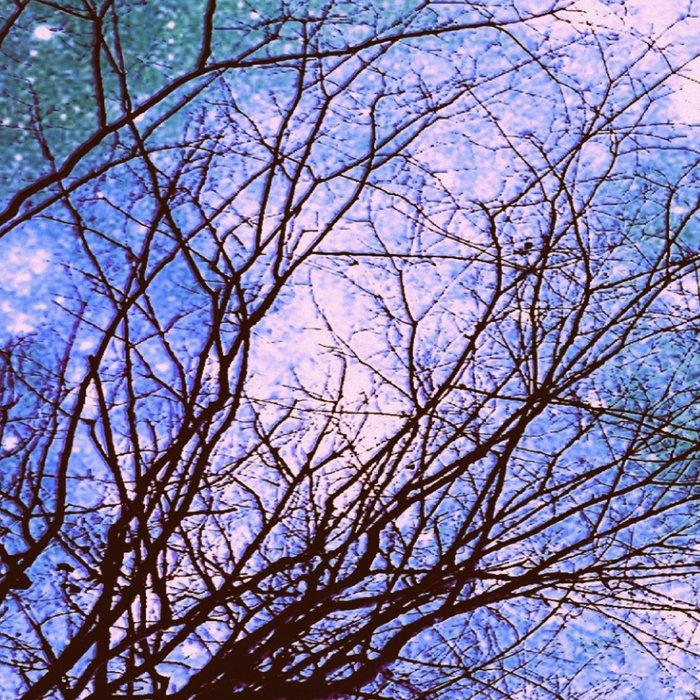 Black Trees Purple Green Space Leggings
