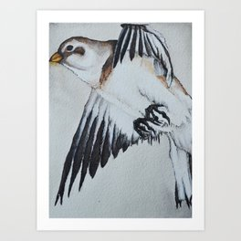 Snow bunting in Flight Art Print