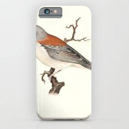 junco cinereus dorsalis16 iPhone Case