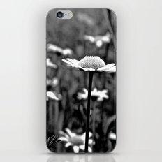 She's a Daisy iPhone & iPod Skin