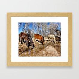 Apache Creek Ponies Framed Art Print