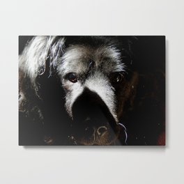 Serious in the sunshine Metal Print