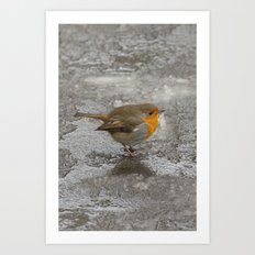 Robin on Ice Art Print