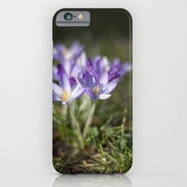 Crocuses iPhone Case