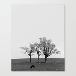 Three Trees and a Bull Canvas Print