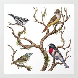 Four Songbirds Art Print