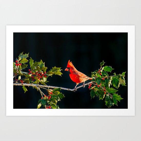 red cardinal Art Print