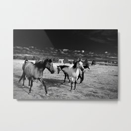 Roaming Mustangs 1 Metal Print