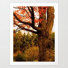 Autumn Lights Art Print