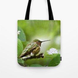 Hummingbird Sitting Tote Bag