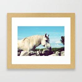Connemara Pony Framed Art Print