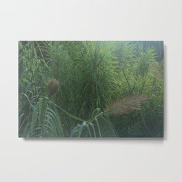 Morning Dew On Cattails Metal Print