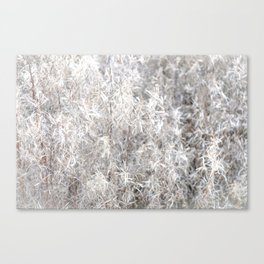 Fireweed Fluff Canvas Print
