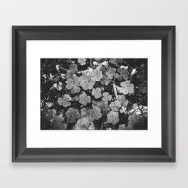 Floral studies I Framed Art Print