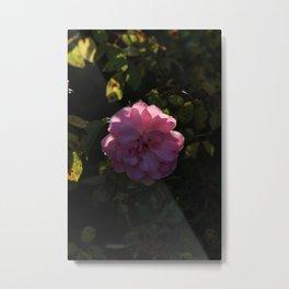 Pink Champagne Metal Print